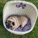 Luxusní postel pro psa s polštářem